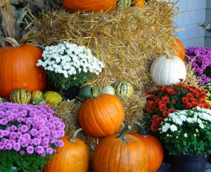 fall_pumpkins