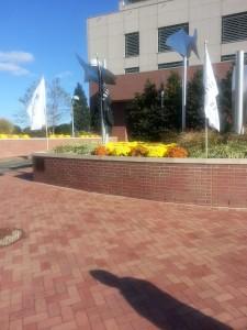 Dockside Fall landscaping 2015-2