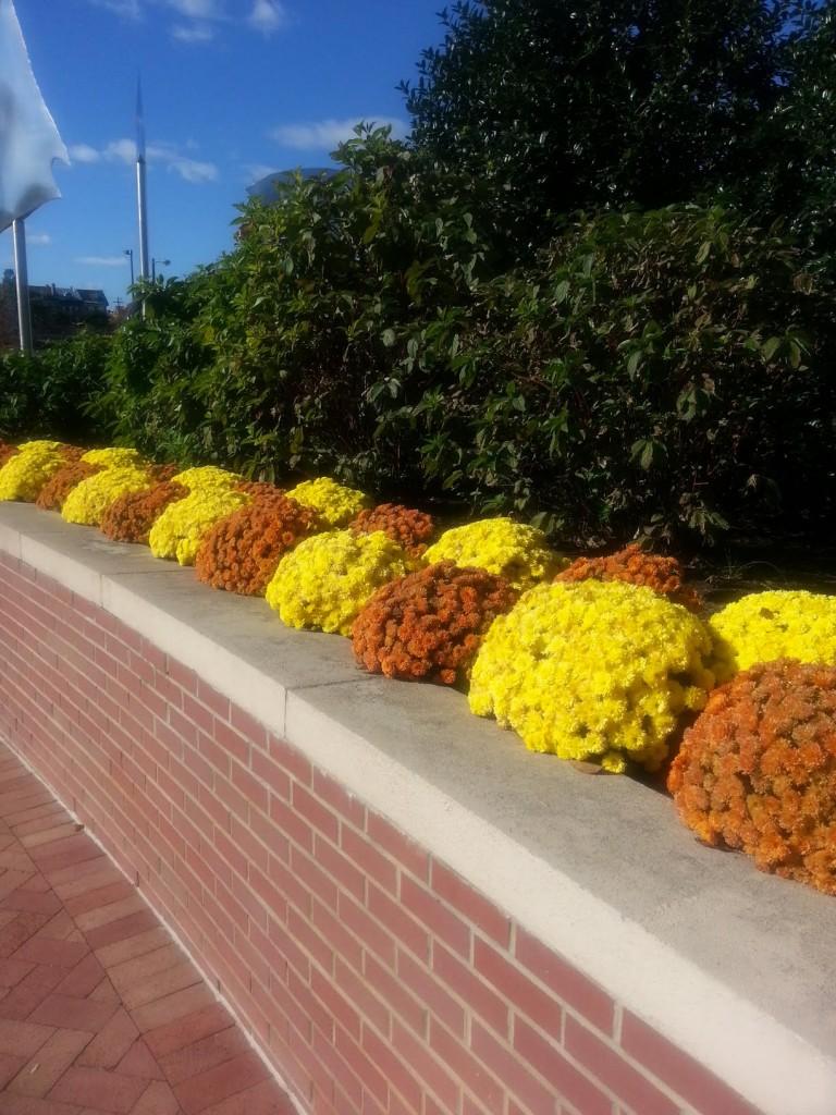 Dockside Fall landscaping 2015-4